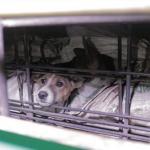 Bupati Karanganyar Akan Tutup Warung Makan Daging Anjing