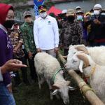 Gaet Peternak Milenial, Pemkab Brebes Kenalkan Domba Sakub