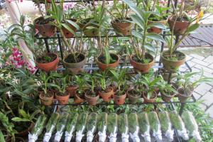 Upaya Yogyakarta Tekan 'Penyusutan' Lahan Pertanian