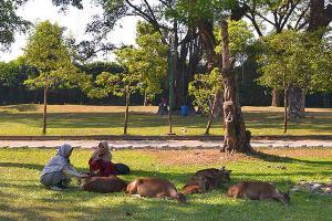Rusa Taman Balekambang Surakarta Boleh Diadopsi