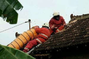 Klaten Libatkan LIPI Teliti Ledakan Tawon Vespa Affanis