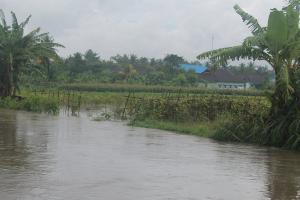 Seribuan Hektare Sawah Kulon Progo Terendam Bah
