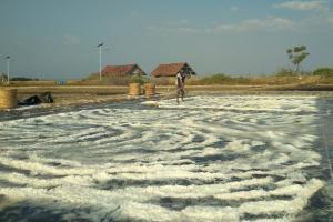 Petani Garam Pati Kurangi Produksi