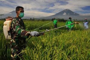 Wereng Cokelat Serang 682 Hektare Padi di Pekalongan