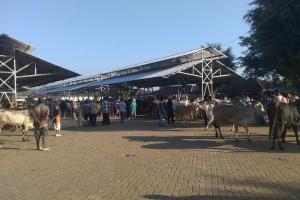 Belum Jelas, Penutupan Pasar Hewan di Gunungkidul