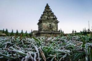 Meluas, Lahan Hortikultura di Dieng Tertutup Embun Upas