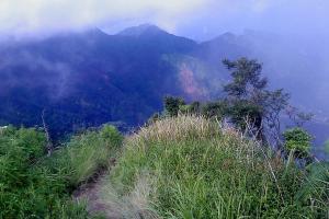 Seluas 479 Hektare Hutan Gunung Muria Rusak