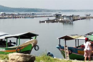 Petani Ikan di Waduk Kedungombo Boyolali Juga Merugi
