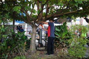Pohon Lapuk Surakarta Didata