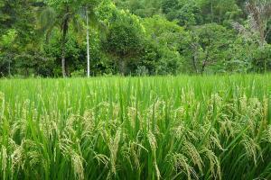 Pemkot Surakarta Akan Pangkas Lahan Pertanian