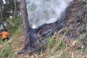 Hutan di Lereng Gunung Andong Kebakaran