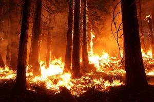 Kebakaran Hutan Merbabu Meluas