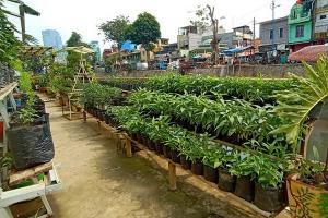 Pertanian Perkotaan Mataram Potong Mata Rantai Niaga
