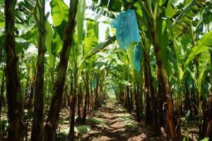 Kementan Godok Beleid Usaha Hortikultura Berbasis ASEAN GAP