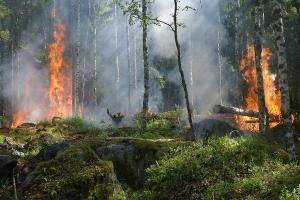 Giliran Lereng Gunung Sindoro Terbakar