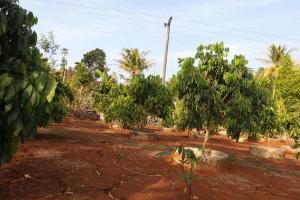 Kementan Akan Bangun Agroekowisata di Bukit Menoreh