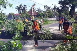 Pemkot Yogyakarta Pangkas Pohon Rindang Jelang Musim Hujan