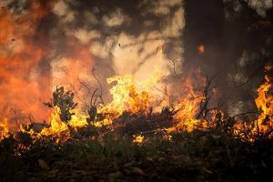 Kebakaran Hutan Gunung Petarangan Meluas