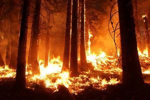 Lereng Gunung Slamet Kembali Terbakar