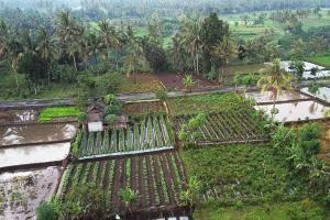 Proyek Jalan Ditjen PDT Geliatkan Ekonomi Daerah Tertinggal