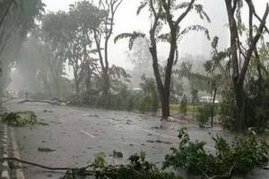 Hujan Deras, 26 Pohon di Demak Tumbang