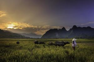Luas Lahan Pertanian Jateng Susut 800 Ribu Hektare