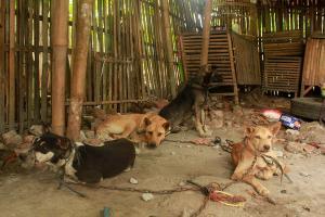 Pemkot Salatiga Akan Larang Warung Olahan Daging Anjing