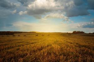 Musim Tanam di Kudus Mundur