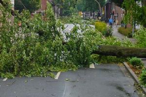 Angin Kencang Tumbangkan Belasan Pohon di Purwokerto