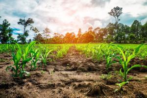 Sumbar Terpincut Pengelolaan Pertanian Jateng