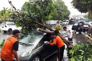 Pepohonan di Surakarta Tumbang kala Hujan Deras