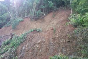 Menanam Pohon Berakar Kuat Bisa Cegah Tanah Longsor