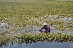 Pemprov Jateng Siapkan Asuransi Bagi Petani Gagal Panen