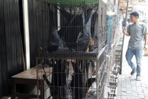 Pedagang Kelelawar di Solo Tak Khawatir Virus Corona