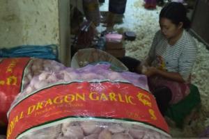 Harga Bawang Putih di Kudus 'Meroket' Hingga Rp50.000/KG