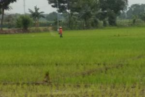 Pemkab Pati Dorong Pertanian Agar Tetap Berproduksi