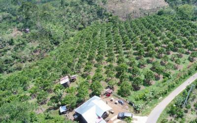 Pemerintah Akan Rumuskan Standar Mutu Produk Pertanian