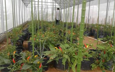Pengembangan Balai Benih Hortikultura Berorientasi Ekspor
