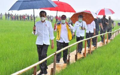 Kerumunan di Maumere, NasDem: Jokowi kerja bukan kumpulkan massa