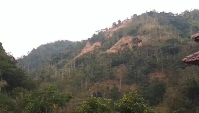 Jateng  'Galakkan' Penghijauan Untuk Cegah Banjir
